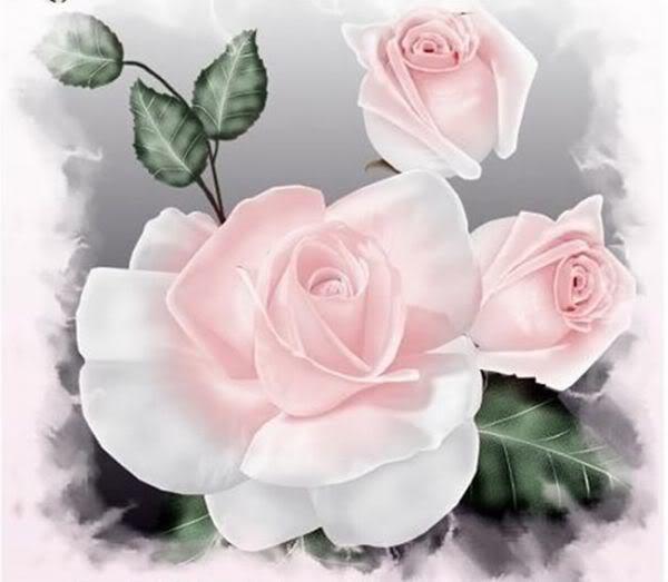 Lule dhe vetëm lule! Fx_8JS0xyM3rQsZb7nxC1XnTSePKodcEyTxRuasau1lfX5uNjZMkhQ==