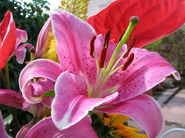 Lule dhe vetëm lule! JtN4pXWTQoYqztFjcfSMzbko8DY26juTJ9hB-hUCkKHM1U4moflaaQ==